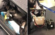 Dog dies after United flight attendant forces it into overhead bin